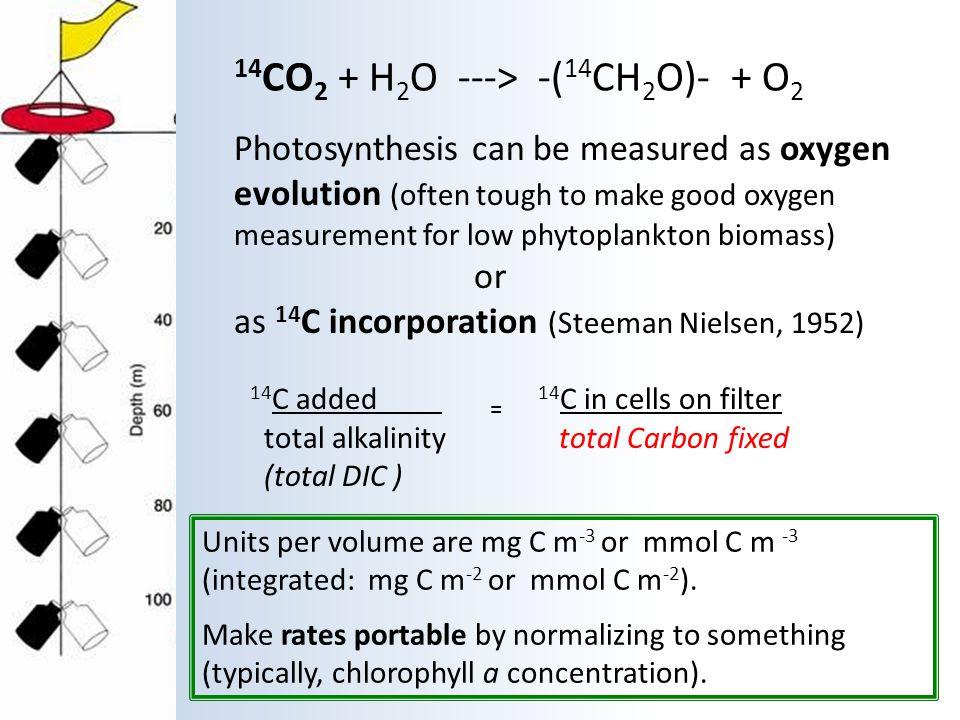 14CO2 + H2O ---> -(14CH2O)- + O2
