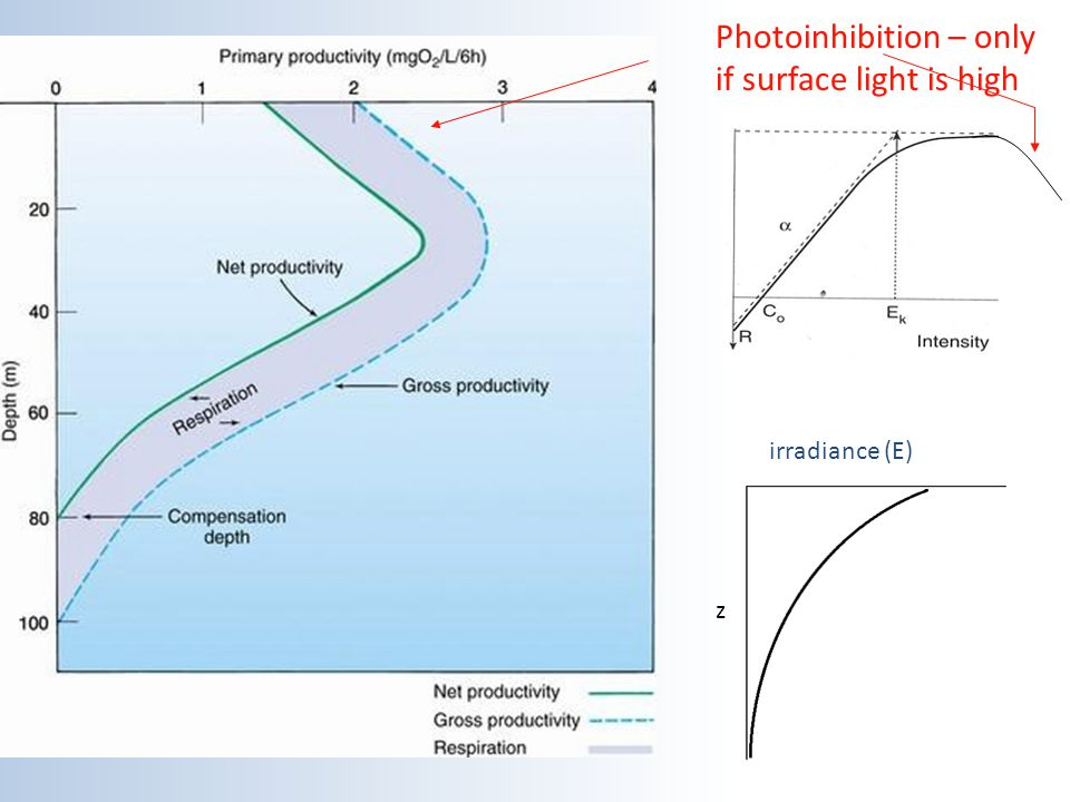 Photoinhibition – only if surface light is high