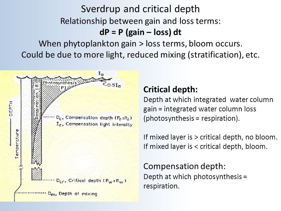 Sverdrup and critical depth Relationship between gain and loss terms: dP = P (gain – loss) dt When phytoplankton gain > loss terms, bloom occurs. Could be due to more light, reduced mixing (stratification), etc.