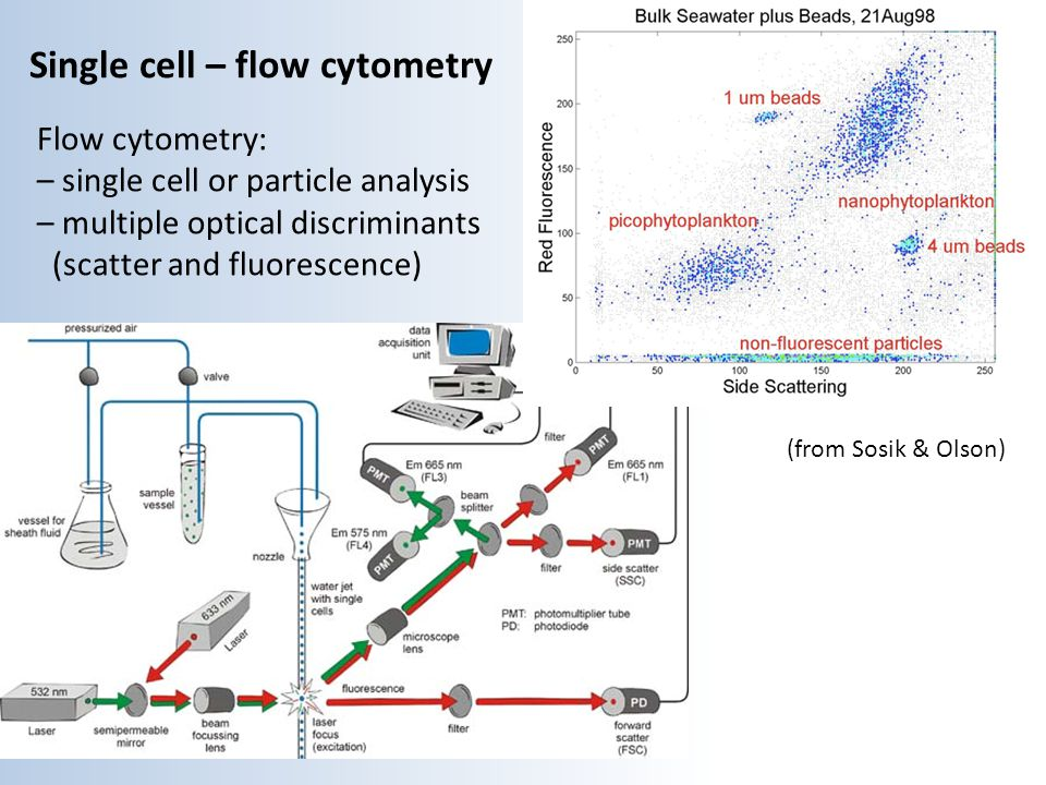 Single cell – flow cytometry