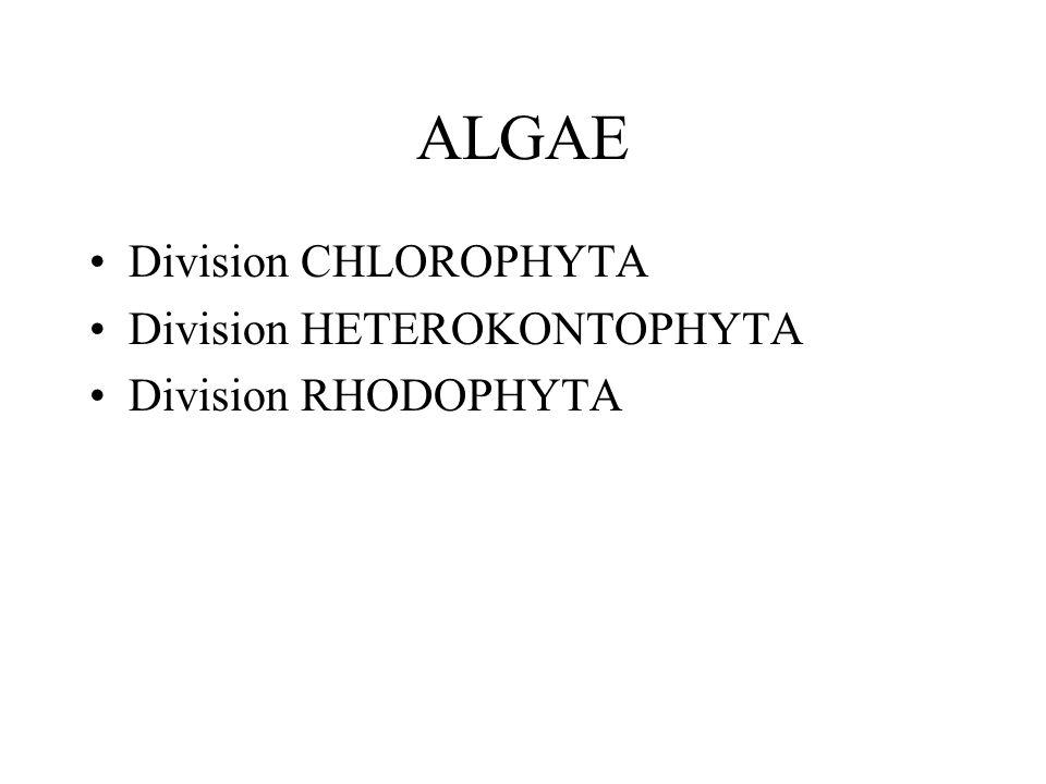 ALGAE Division CHLOROPHYTA Division HETEROKONTOPHYTA