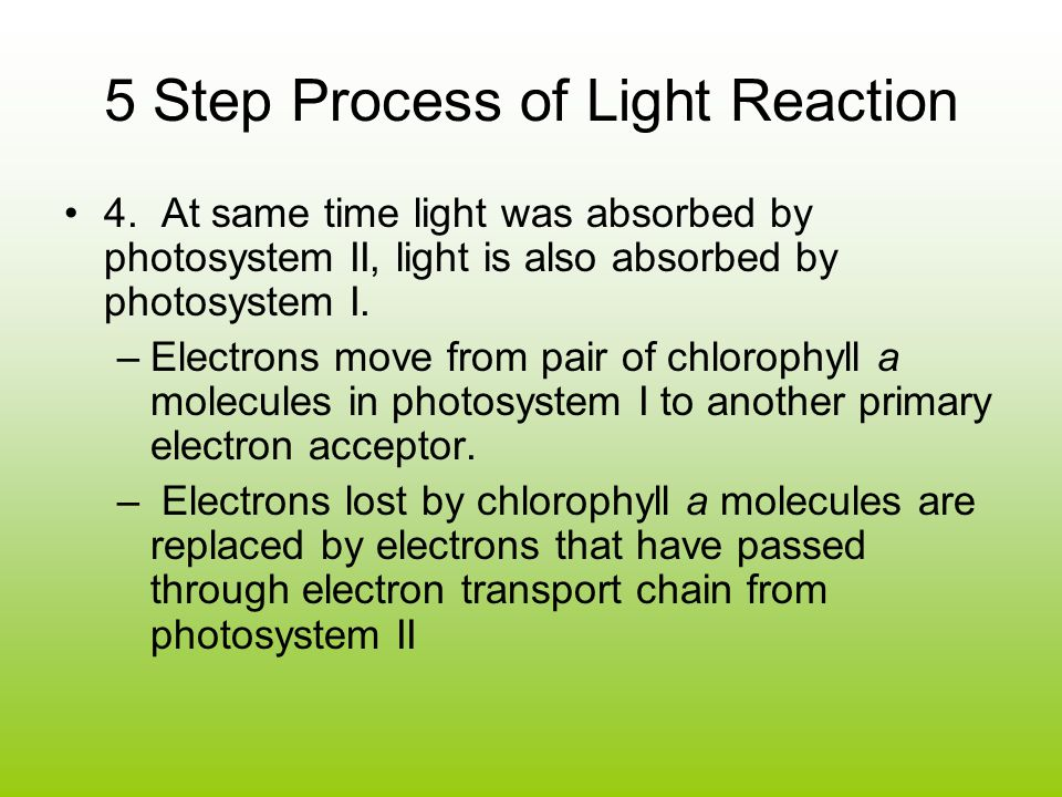 5 Step Process of Light Reaction