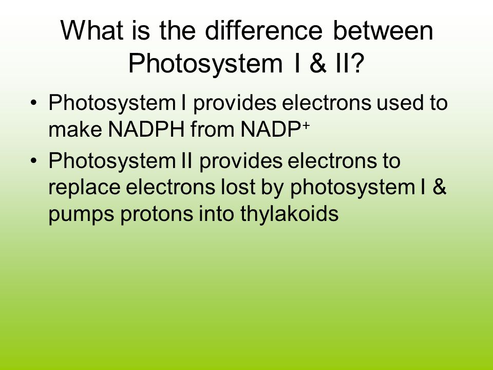 What is the difference between Photosystem I & II