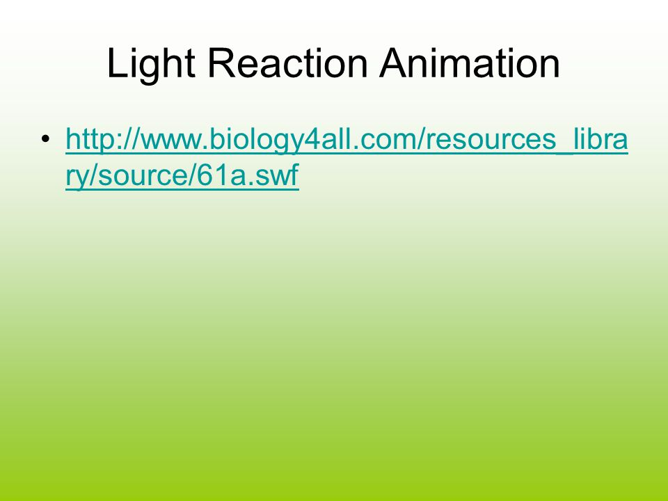 Light Reaction Animation
