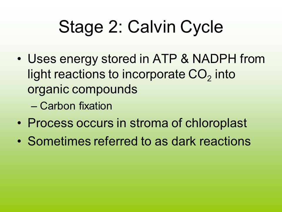 Stage 2: Calvin Cycle Uses energy stored in ATP & NADPH from light reactions to incorporate CO2 into organic compounds.