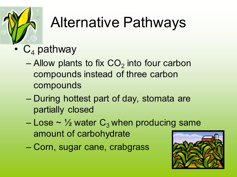 Alternative Pathways C4 pathway