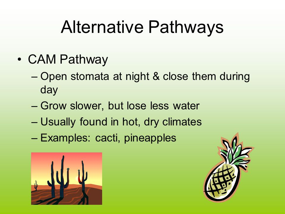 Alternative Pathways CAM Pathway