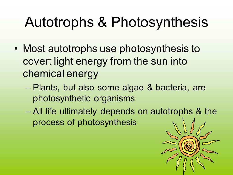 Autotrophs & Photosynthesis