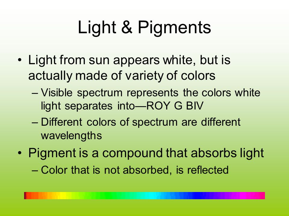 Light & Pigments Light from sun appears white, but is actually made of variety of colors.