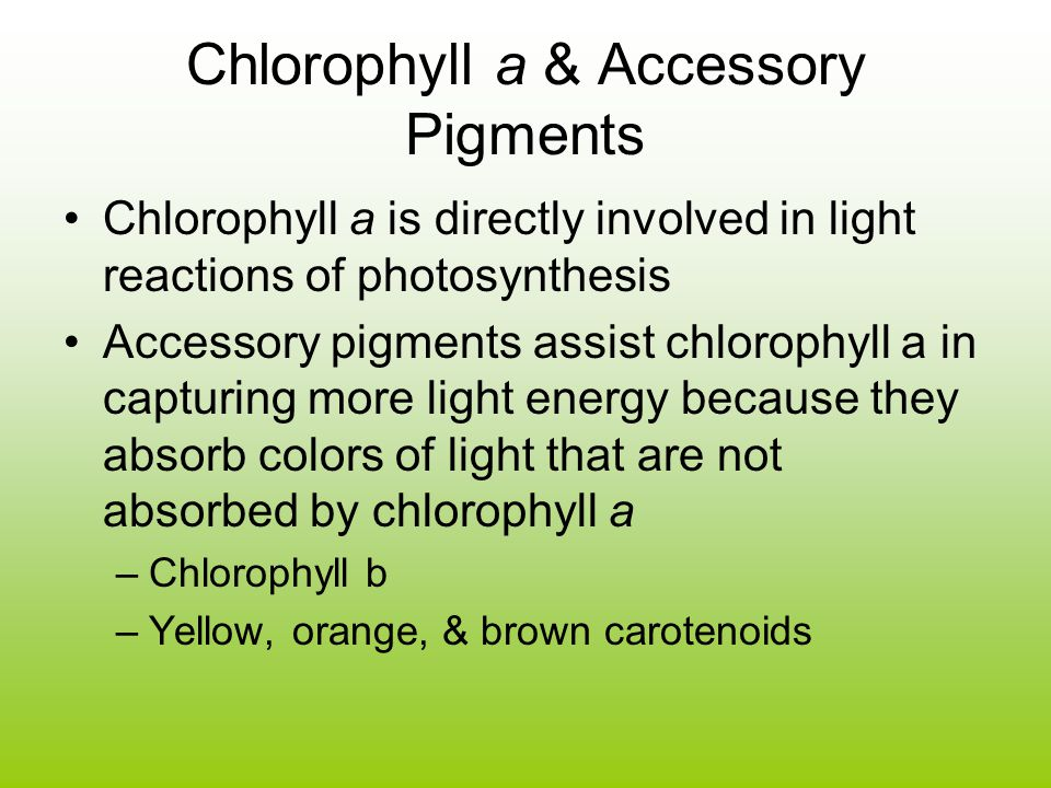 Chlorophyll a & Accessory Pigments