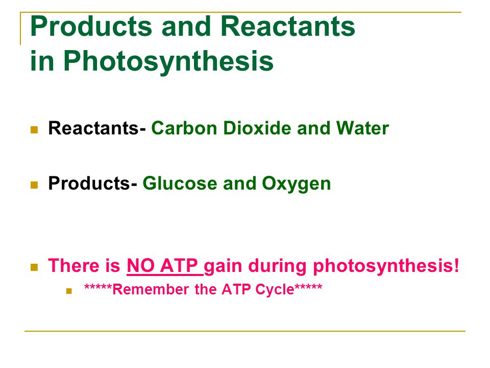 Products and Reactants in Photosynthesis