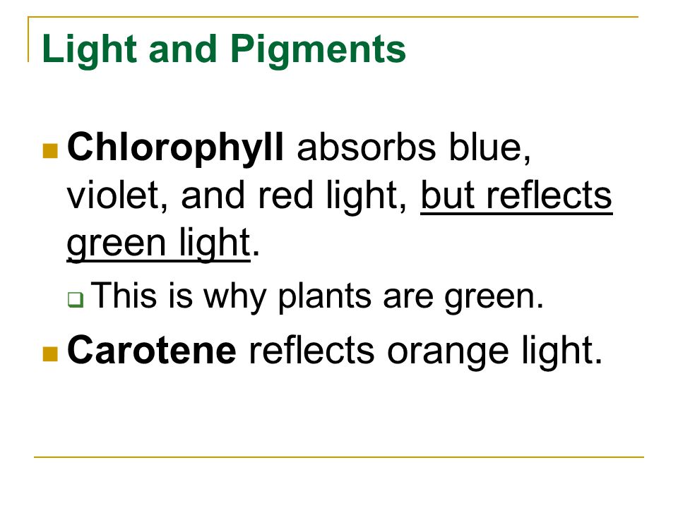 Carotene reflects orange light.