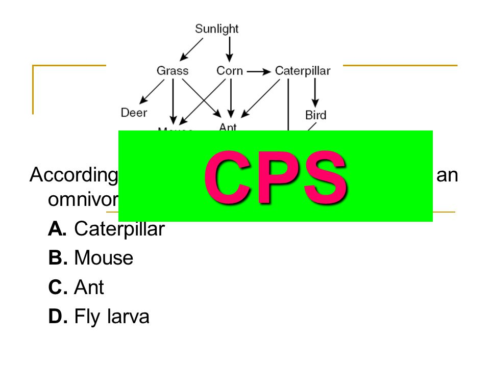 CPS According to this food web, which of these is an omnivore