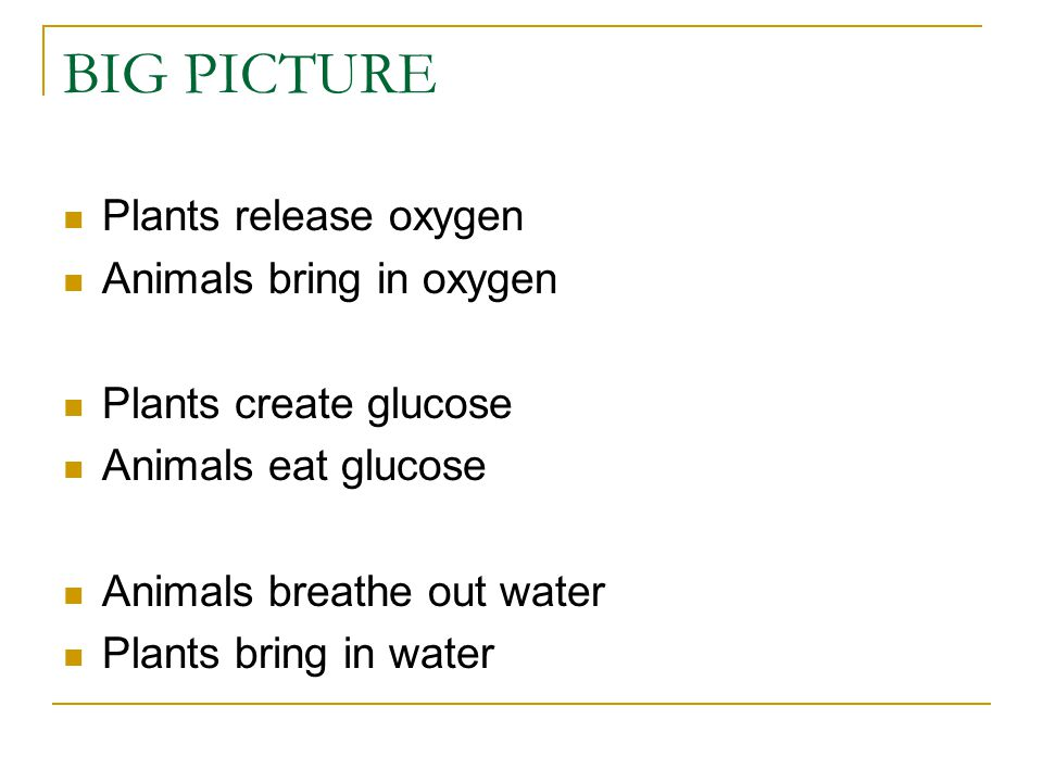 BIG PICTURE Plants release oxygen Animals bring in oxygen