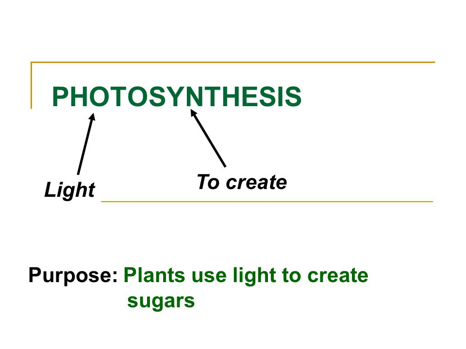 PHOTOSYNTHESIS To create Light