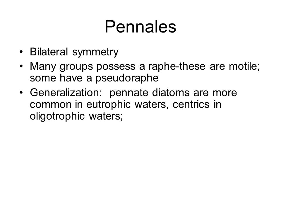 Pennales Bilateral symmetry