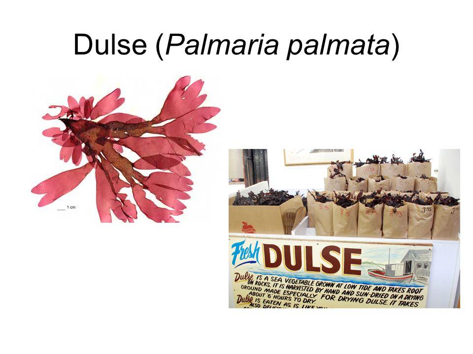 Dulse (Palmaria palmata)