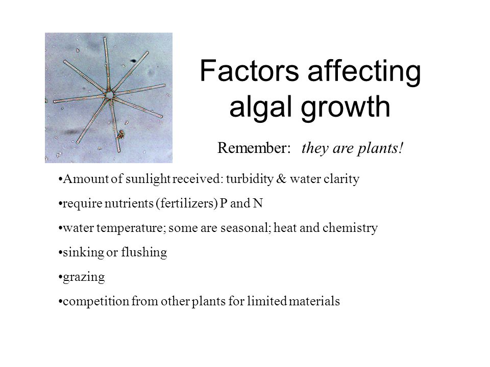 Factors affecting algal growth