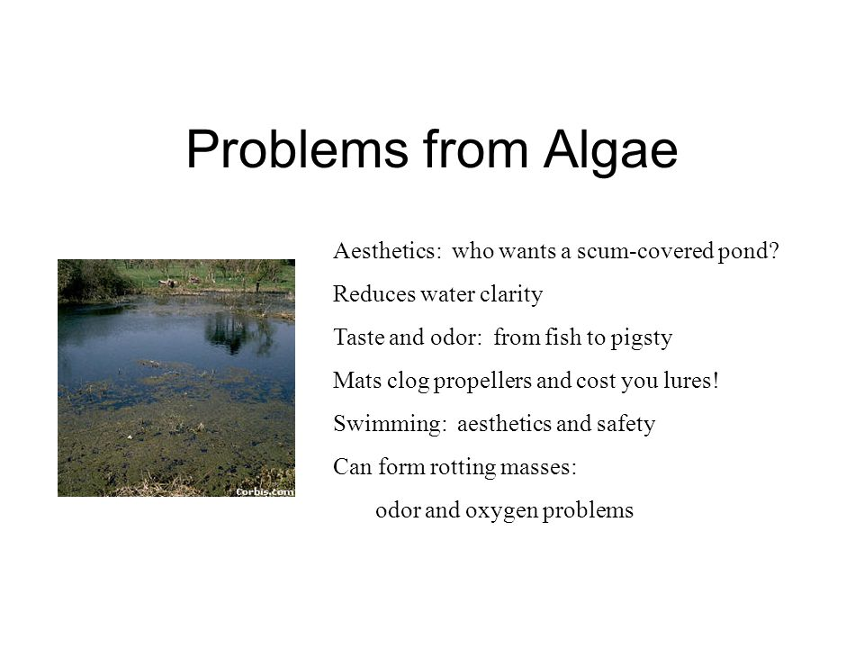Problems from Algae Aesthetics: who wants a scum-covered pond