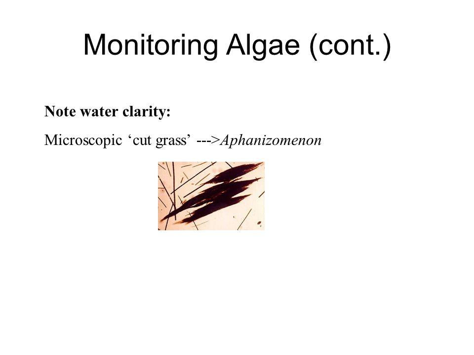 Monitoring Algae (cont.)