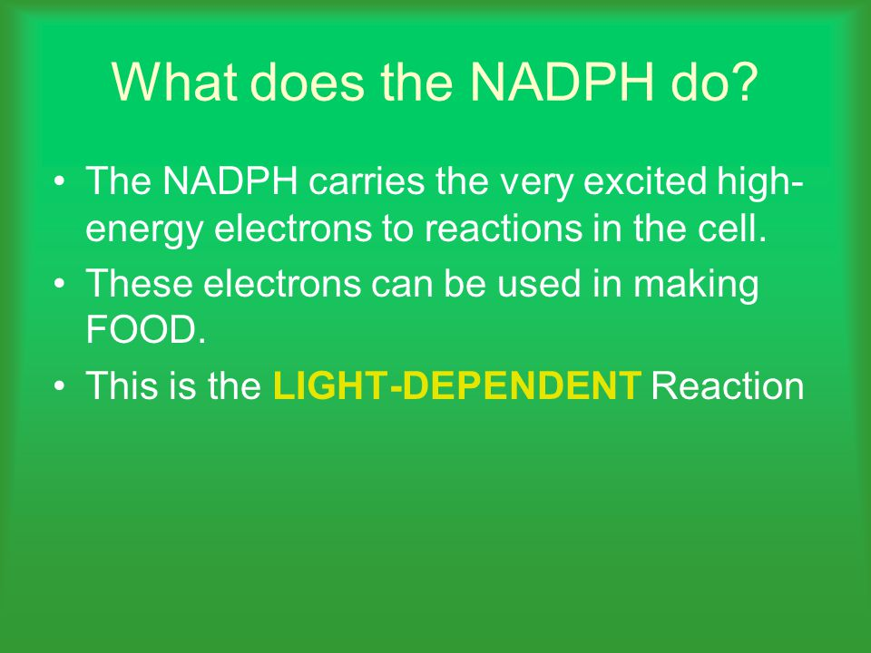 What does the NADPH do The NADPH carries the very excited high-energy electrons to reactions in the cell.