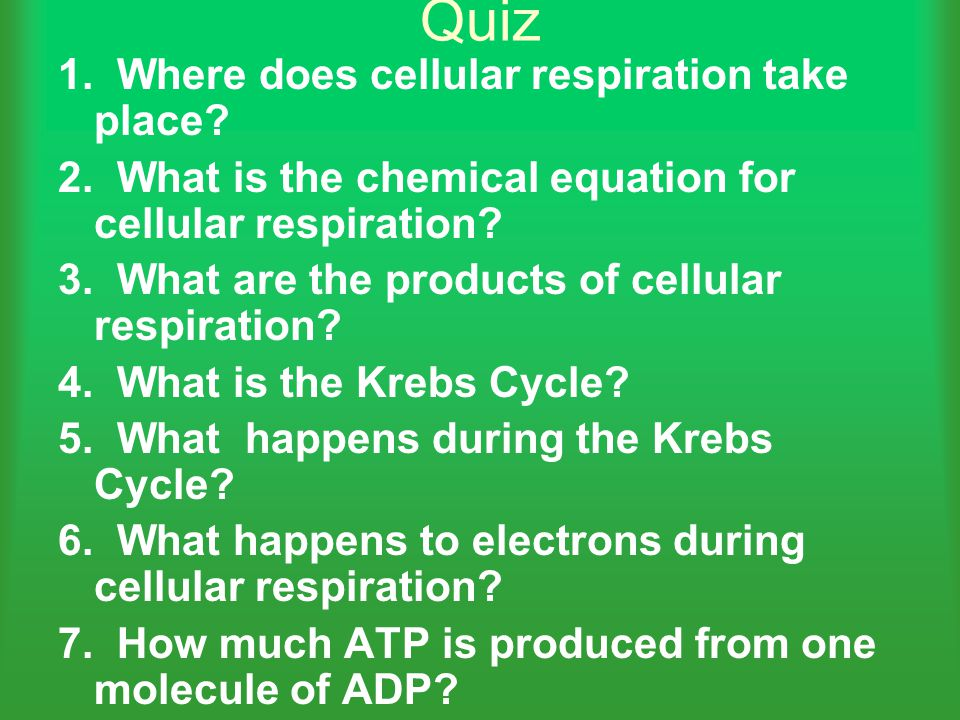 Quiz 1. Where does cellular respiration take place