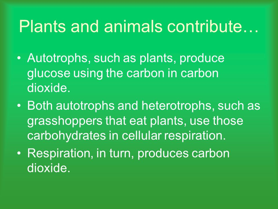 Plants and animals contribute…