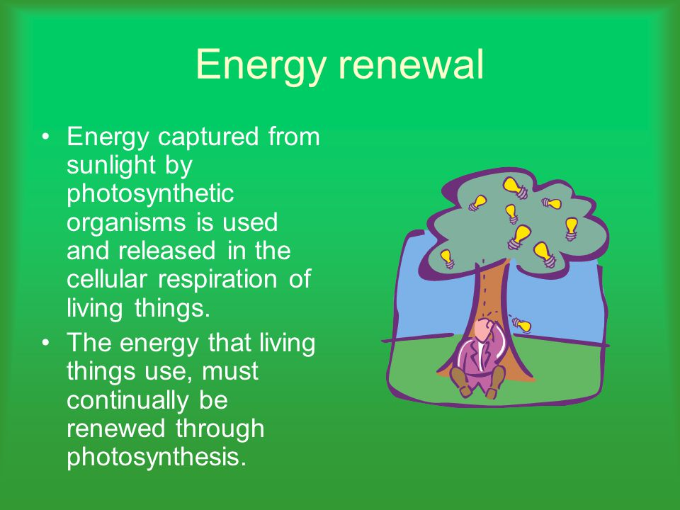 Energy renewal Energy captured from sunlight by photosynthetic organisms is used and released in the cellular respiration of living things.