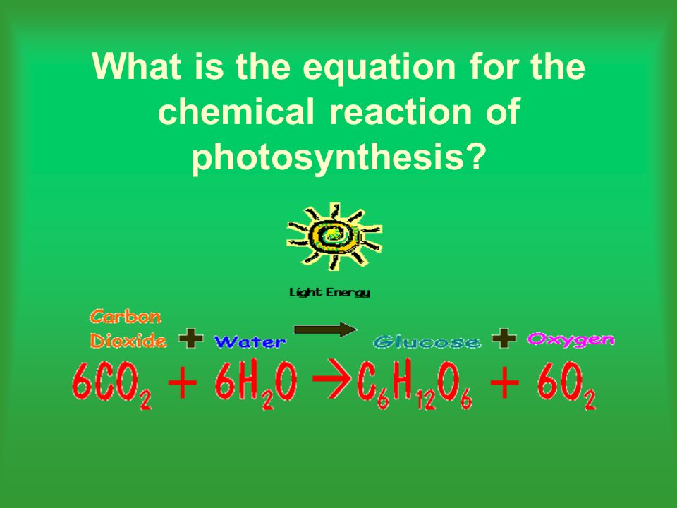 what is the equation for photosynthesis Photosynthesis is a process used by plants and other organisms to convert since water is used as the electron donor in oxygenic photosynthesis, the equation for.