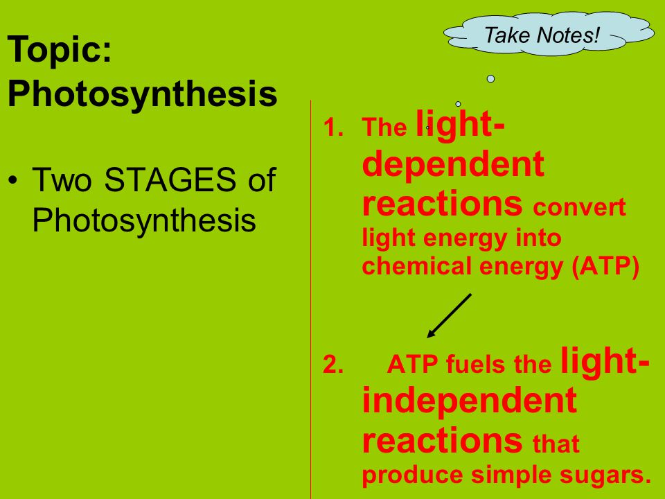 Topic: Photosynthesis