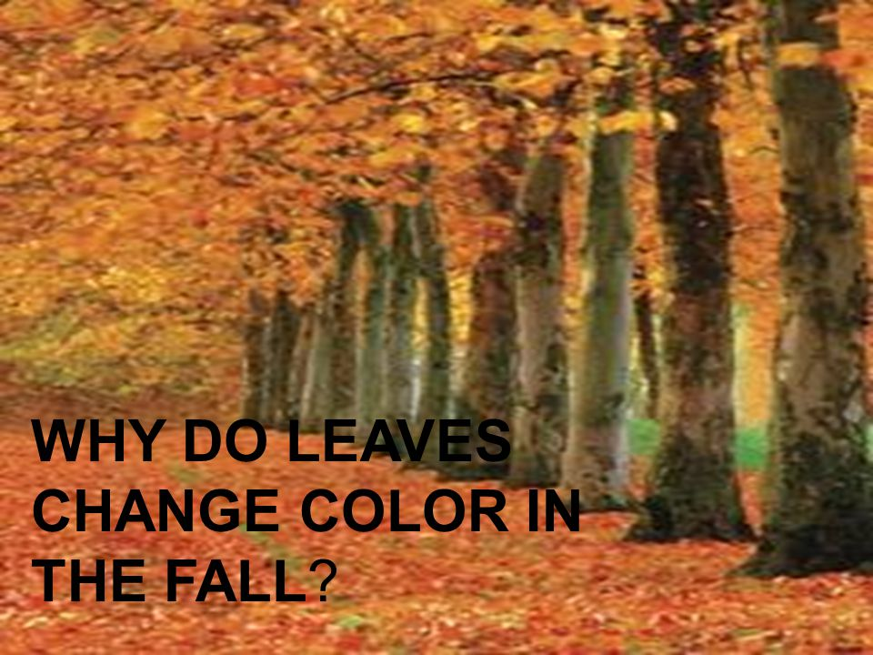 WHY DO LEAVES CHANGE COLOR IN THE FALL