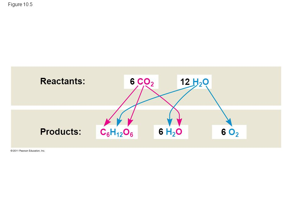 Reactants: 6 CO2 12 H2O Products: C6H12O6 6 H2O 6 O2 Figure 10.5