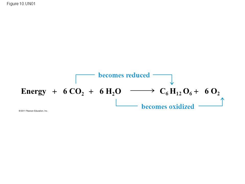 Energy  6 CO2  6 H2O C6 H12 O6  6 O2 becomes reduced