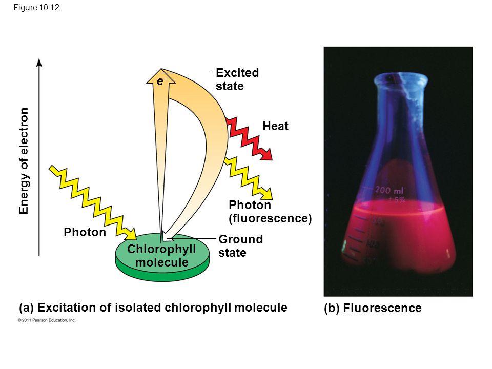 Photon (fluorescence)