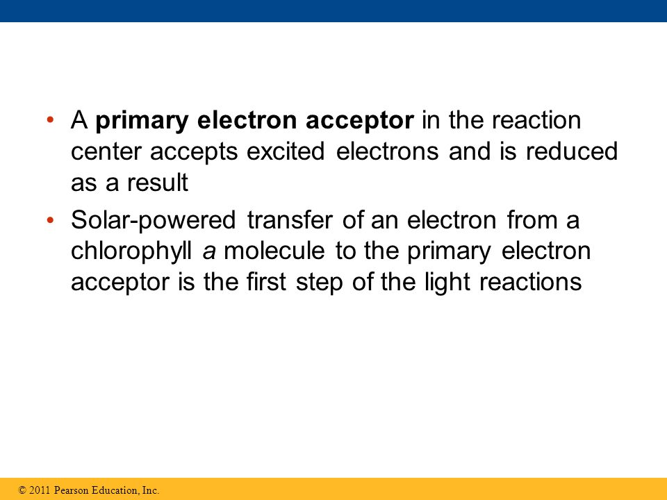 A primary electron acceptor in the reaction center accepts excited electrons and is reduced as a result