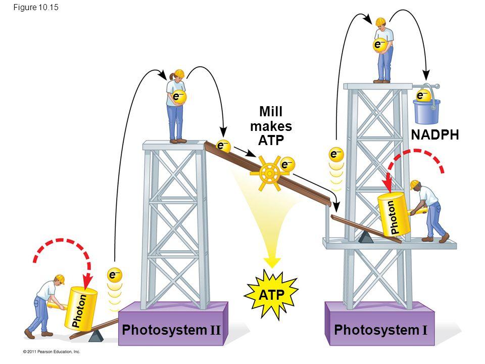Mill makes ATP NADPH ATP Photosystem II Photosystem I e e e e e