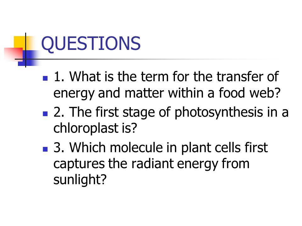 QUESTIONS 1. What is the term for the transfer of energy and matter within a food web 2. The first stage of photosynthesis in a chloroplast is