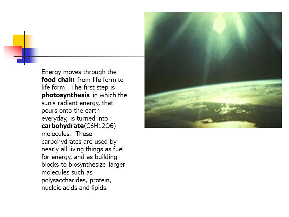 Energy moves through the food chain from life form to life form
