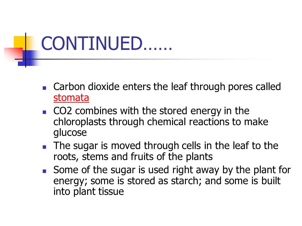 CONTINUED…… Carbon dioxide enters the leaf through pores called stomata.