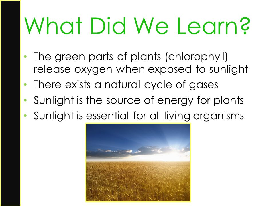 What Did We Learn The green parts of plants (chlorophyll) release oxygen when exposed to sunlight.