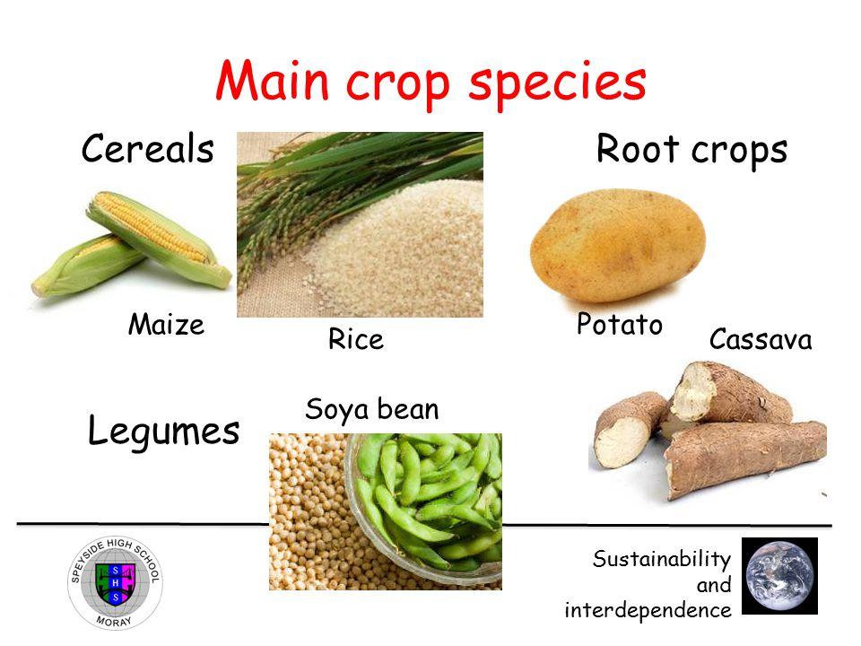 Main crop species Cereals Root crops Legumes Maize Potato Rice Cassava