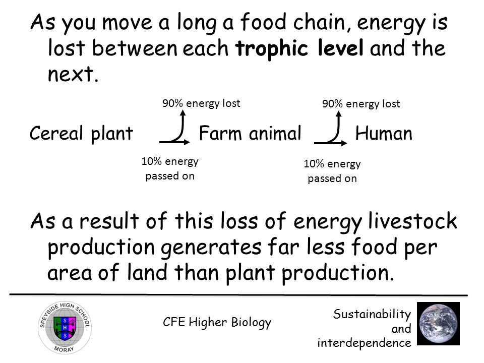 As you move a long a food chain, energy is lost between each trophic level and the next.