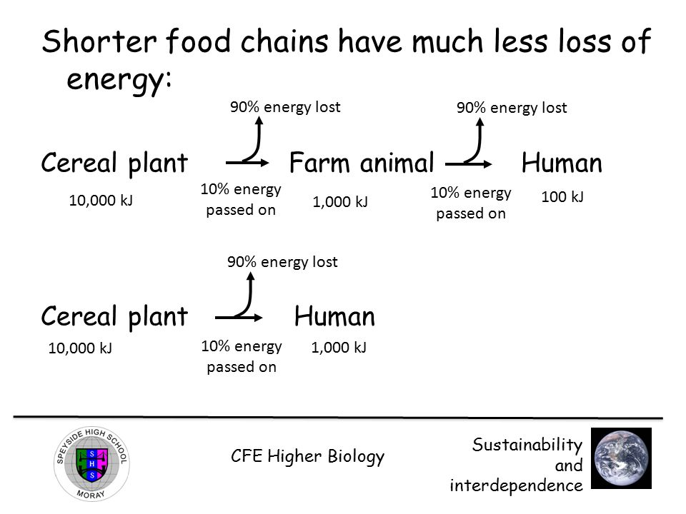 Shorter food chains have much less loss of energy: