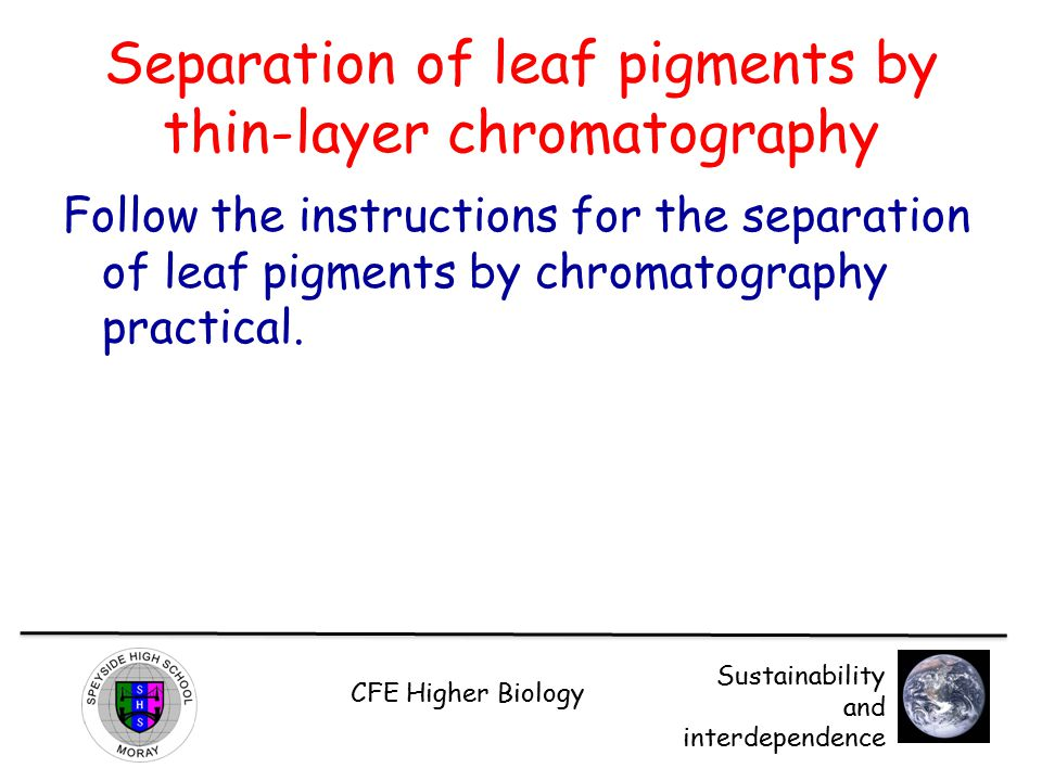 Separation of leaf pigments by thin-layer chromatography