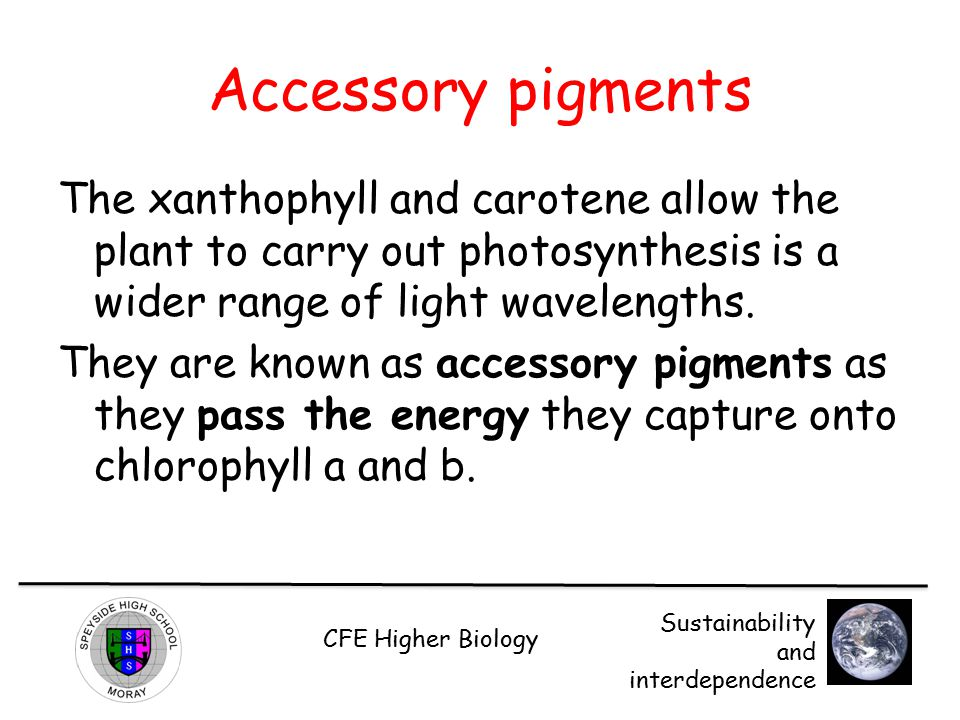 Accessory pigments The xanthophyll and carotene allow the plant to carry out photosynthesis is a wider range of light wavelengths.