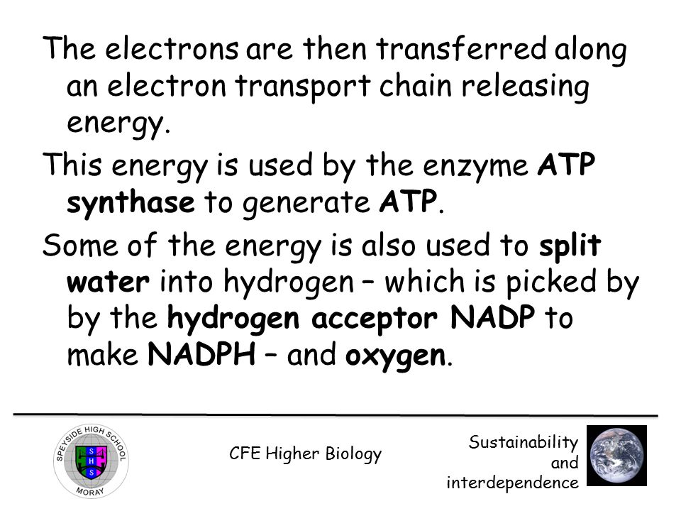The electrons are then transferred along an electron transport chain releasing energy.