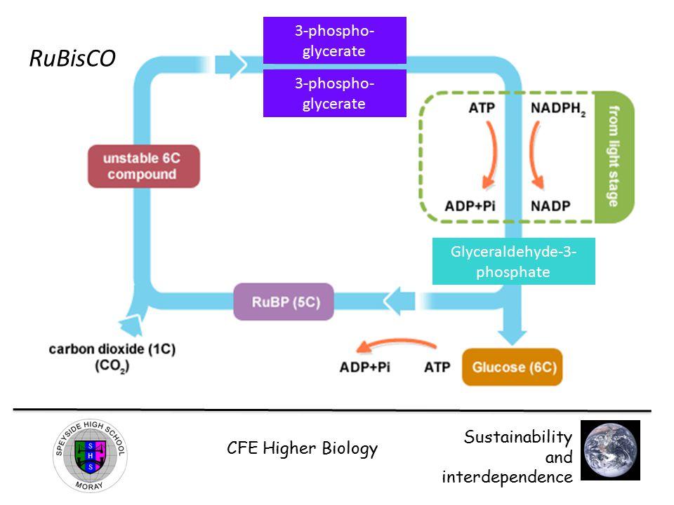 Glyceraldehyde-3-phosphate