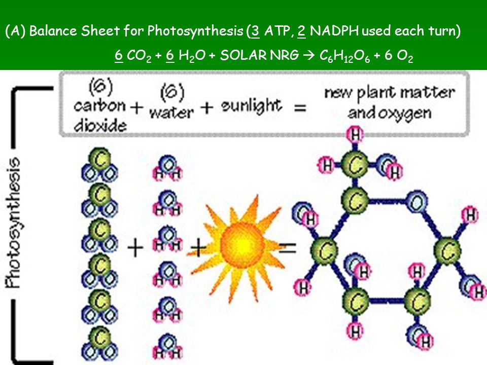 (A) Balance Sheet for Photosynthesis (3 ATP, 2 NADPH used each turn)