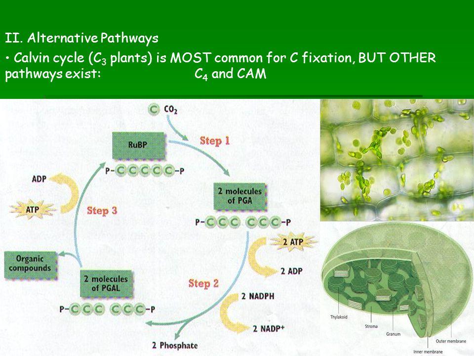 II. Alternative Pathways