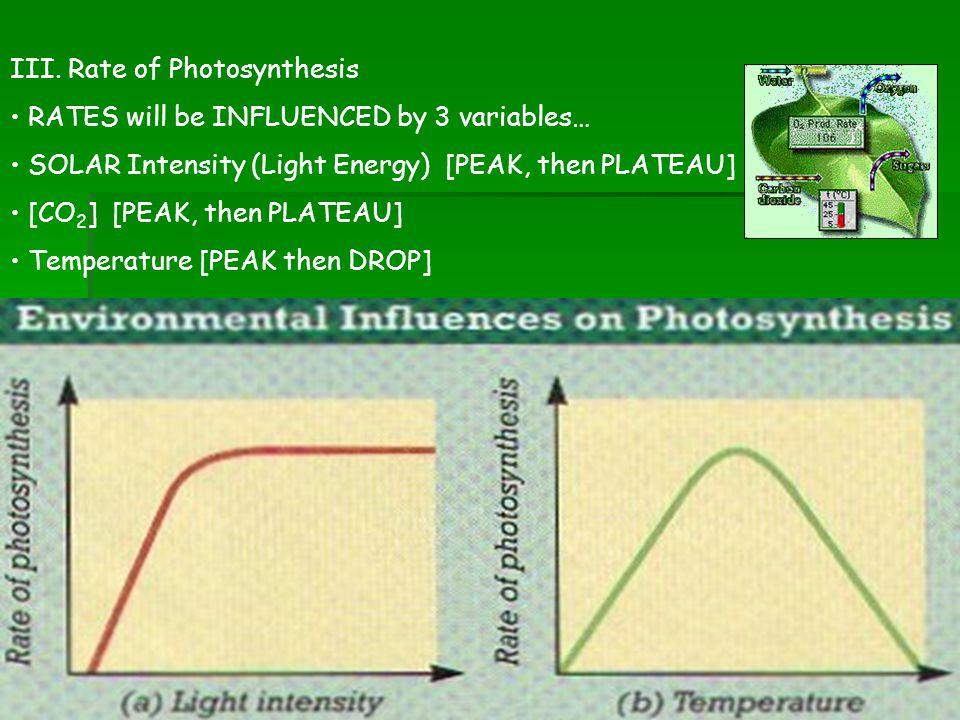 III. Rate of Photosynthesis